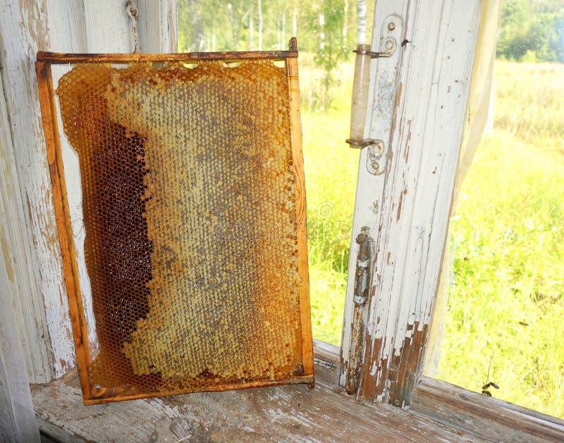 Download Nid d'abeilles image stock. Image du sucrerie, honeycomb - 76086845