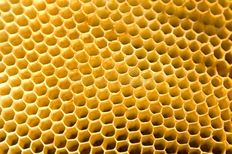 nid d'abeilles image libre de droits