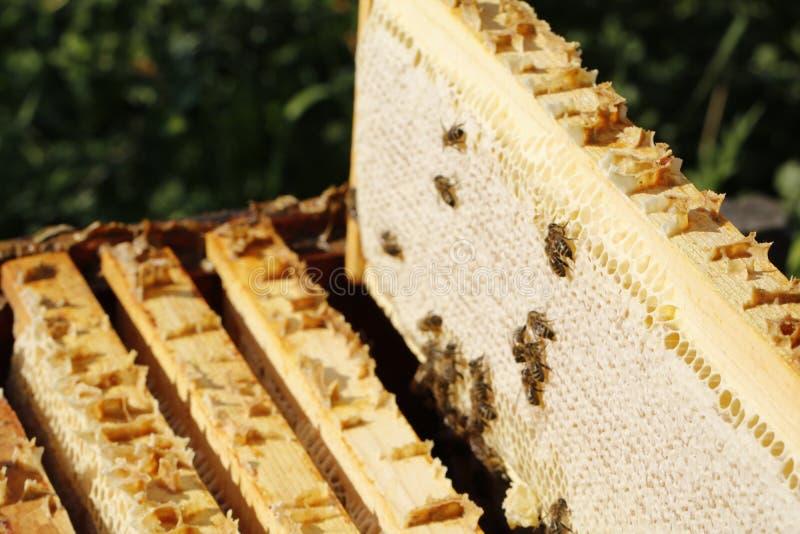 Nid d'abeilles photographie stock