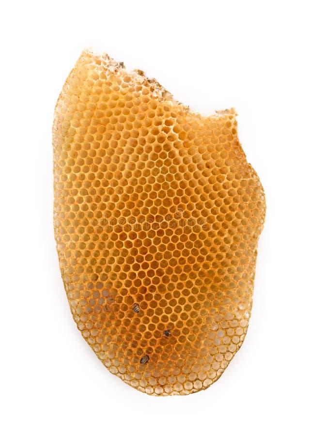 Nid d'abeilles sur le fond blanc images libres de droits