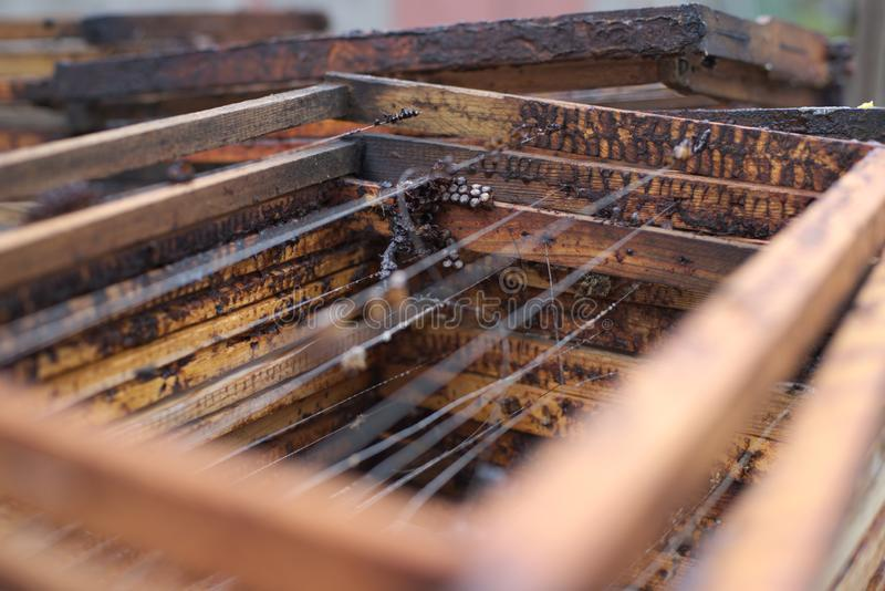 Nid d'abeilles vide d'apparence de cadre de ruche images libres de droits