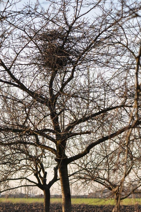 Nid d'oiseau dans l'arbre images libres de droits