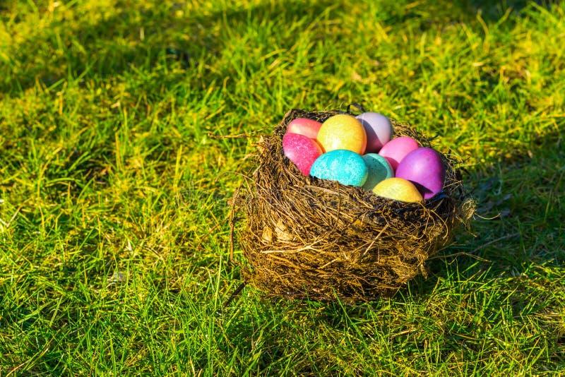 Nid d'oiseau rempli d'oeufs peints colorés, fond de Pâques photographie stock libre de droits