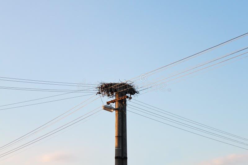Nid de cigogne sur l'éclairage public photographie stock libre de droits
