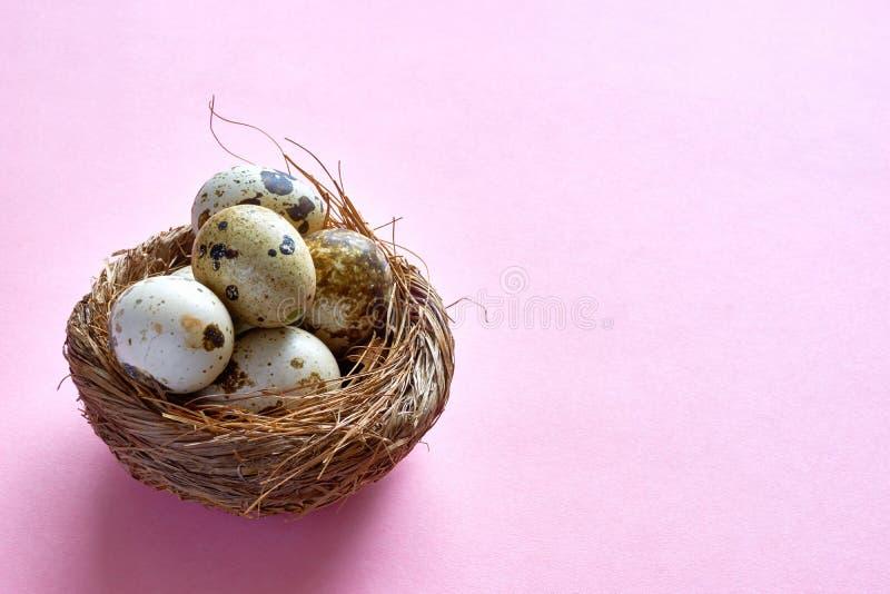 Nid de Pâques avec des oeufs de caille sur un fond rose photographie stock libre de droits