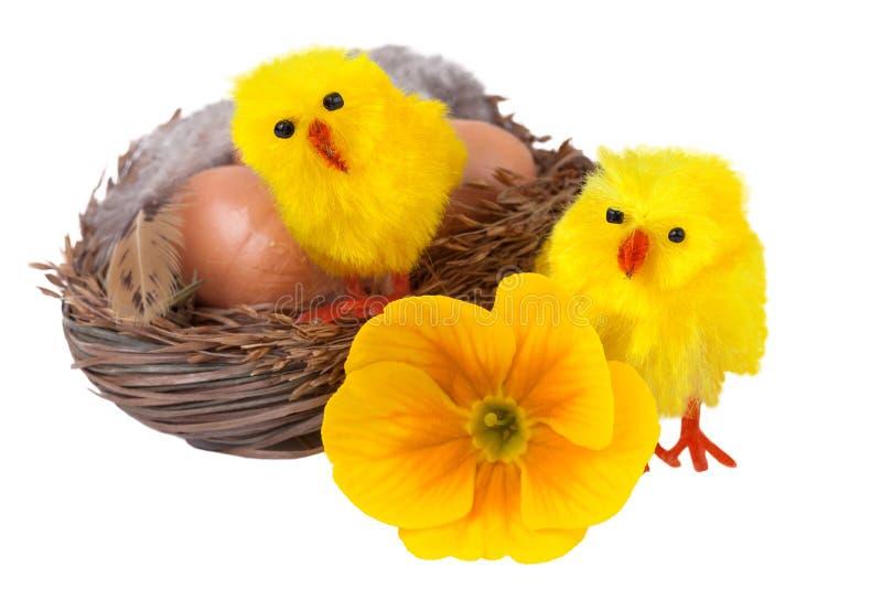 Nid de Pâques avec les poussins jaunes d'isolement sur le blanc images libres de droits