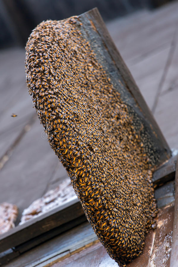 Nid des abeilles sauvages sur la maison images stock