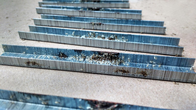 Nid des fourmis avec des oeufs photographie stock libre de droits