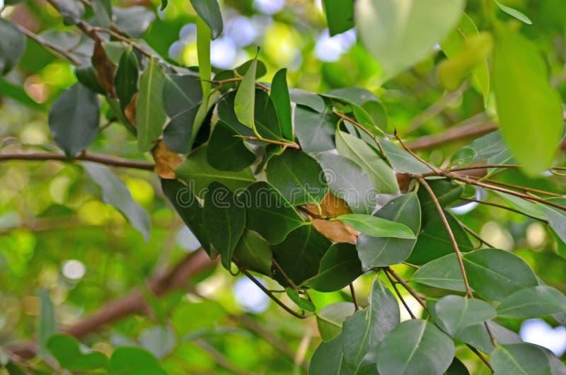 Nid des fourmis rouges photo libre de droits