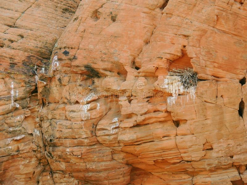 Nid du ` s d'oiseau fait dans un défaut en grès et rempli de brindilles et de branches autour de la région nationale de conservat photos libres de droits