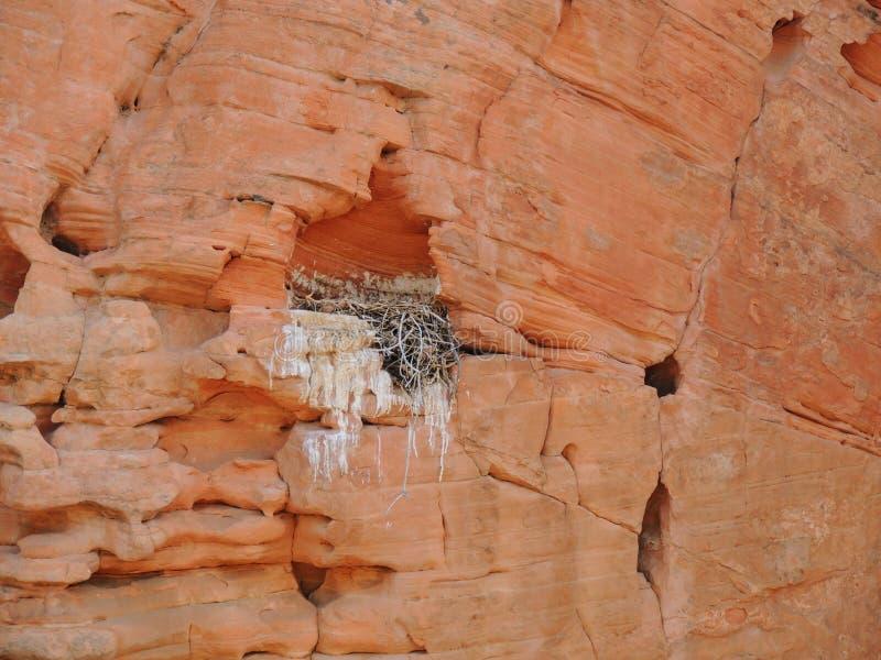 Nid du ` s d'oiseau fait dans un défaut en grès et rempli de brindilles et de branches autour de la région nationale de conservat photos stock