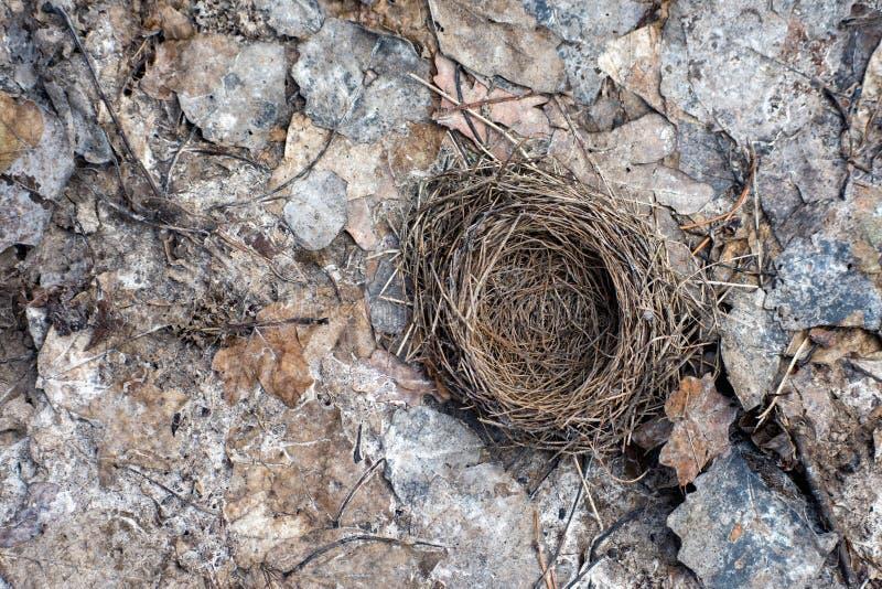 Nid isolé d'oiseau photographie stock libre de droits