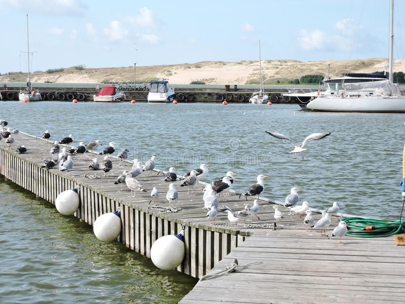 Nida City Marina, Lituania fotografie stock libere da diritti