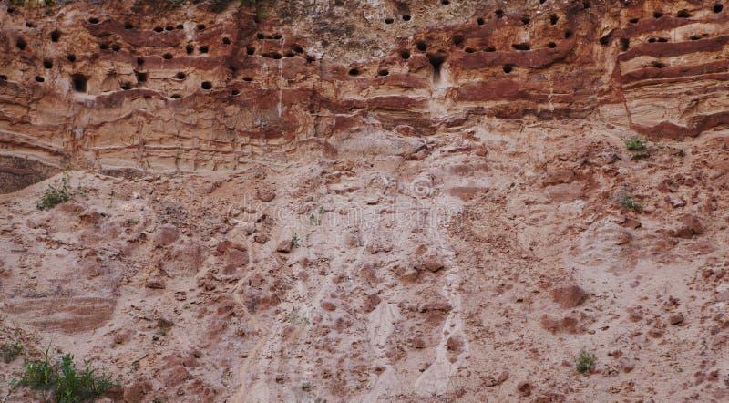 Nidi degli swallows in miniera a cielo aperto sabbiosa. immagini stock