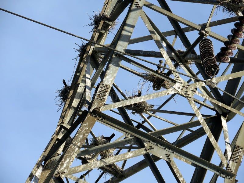 Nidi di Toronto di Cormorant sulla torre 2017 del trasporto di energia immagini stock libere da diritti