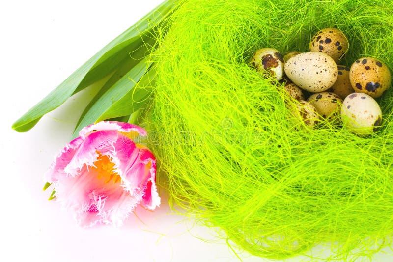 Nido con le uova di Pasqua immagine stock libera da diritti