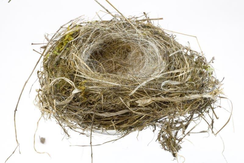 Nido degli uccelli su priorità bassa bianca fotografie stock libere da diritti