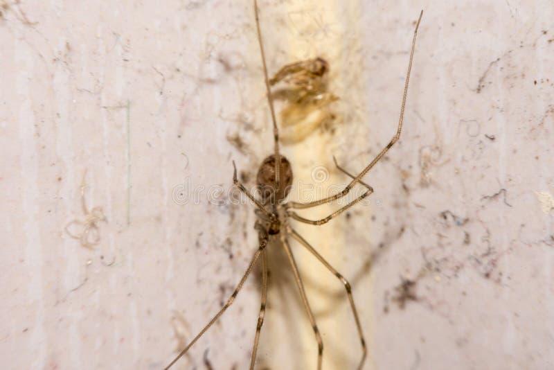 Nido dei ragni nell'angolo fotografia stock libera da diritti