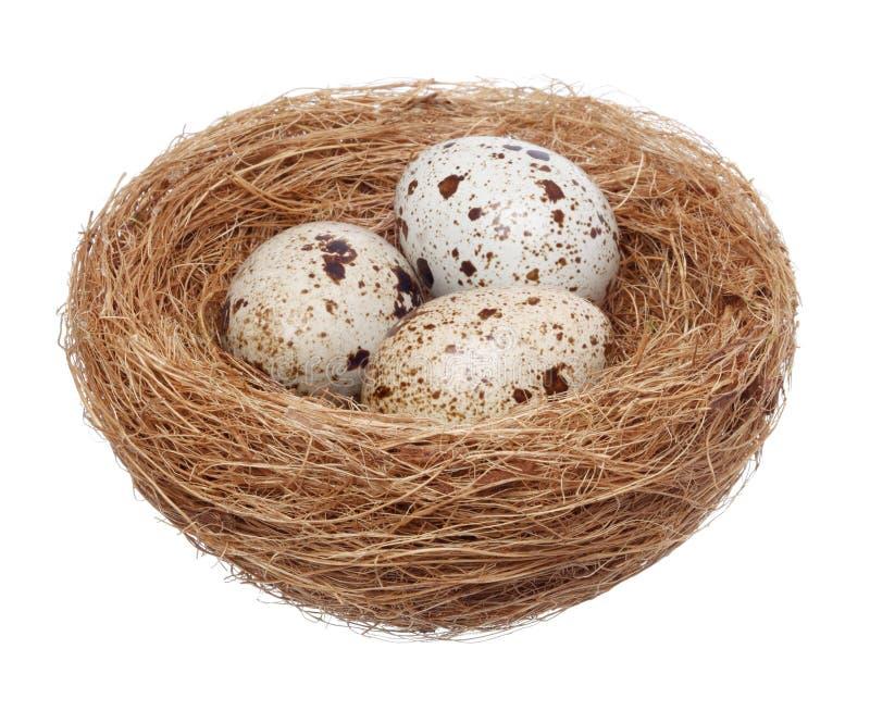 Nido dell'uccello con le uova su bianco fotografia stock libera da diritti
