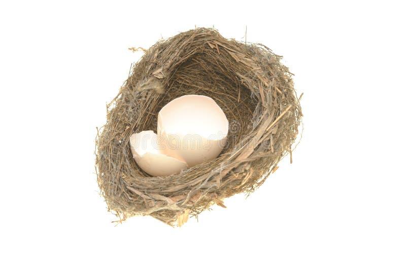 Nido dell'uccello e coperture rotte dell'uovo immagini stock