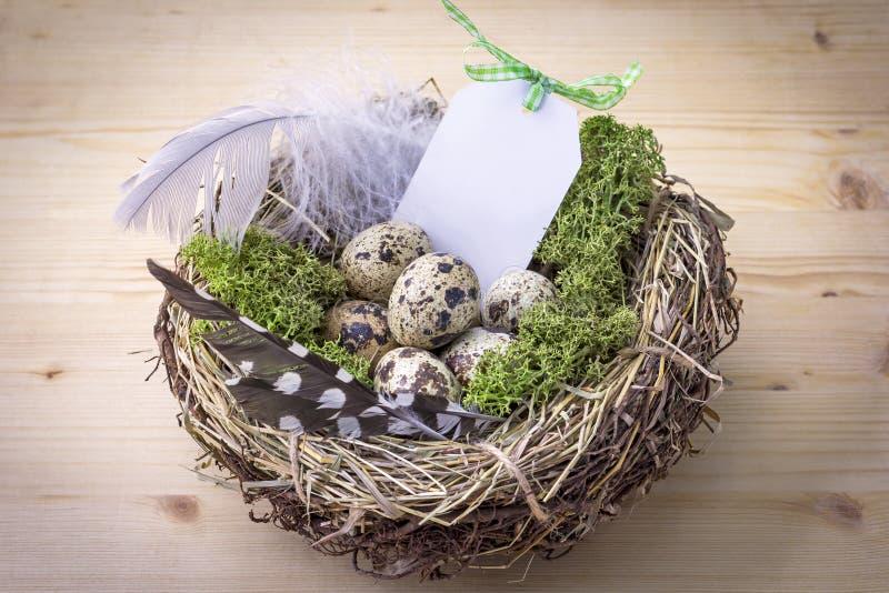 Nido dell'uccello su una tavola con le uova e la piuma immagini stock