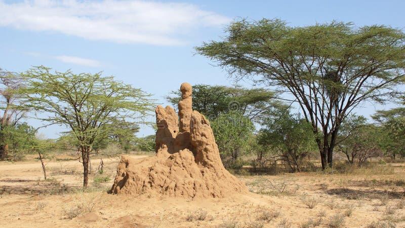Nido della termite, Etiopia, Africa fotografia stock libera da diritti