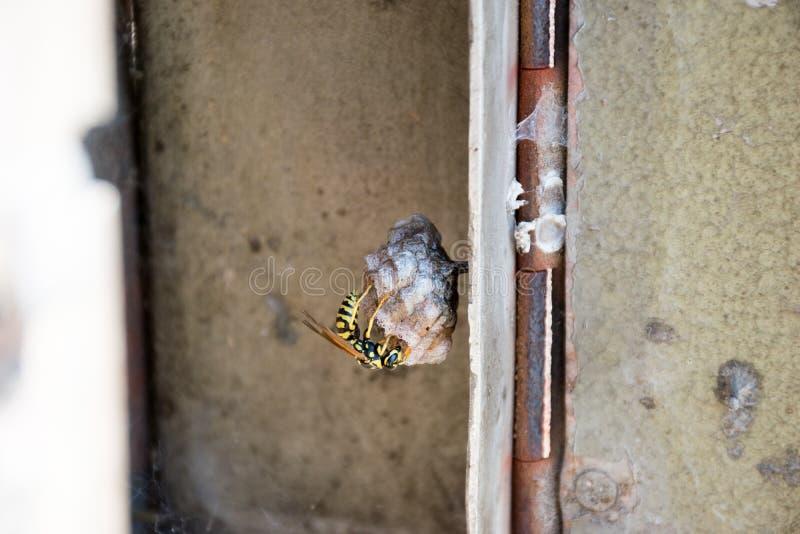 Nido della vespa immagini stock libere da diritti