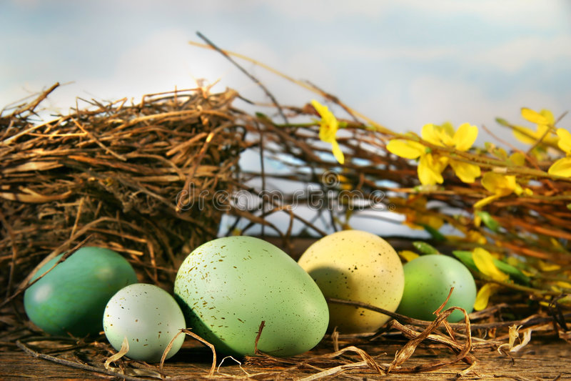 Nido ed uova dell'uccello fotografia stock libera da diritti