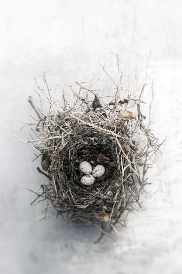 Nido semplice dell'uccello con le uova su Gray Background immagine stock libera da diritti
