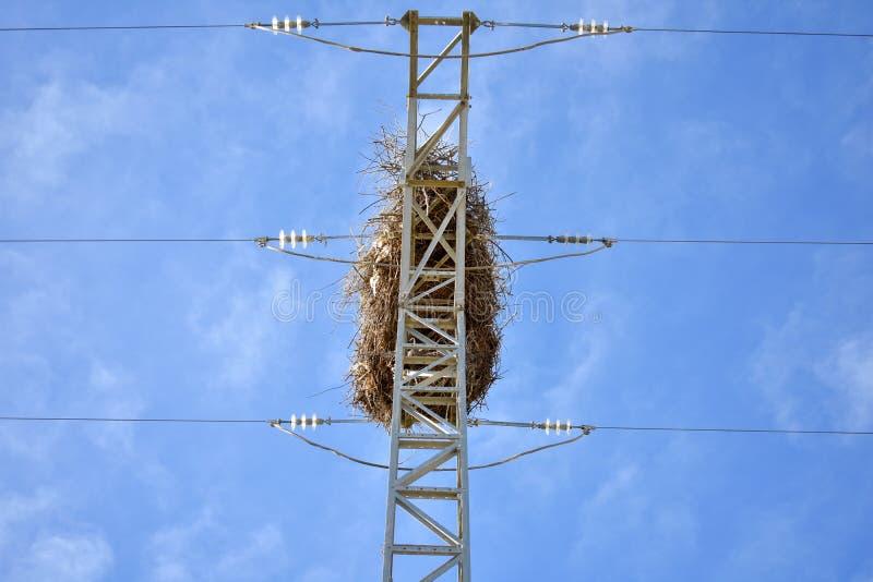 nido vuoto dell'uccello fatto con i rami degli alberi alla cima di una torre elettrica di alta tensione che conduce l'elettricità immagini stock libere da diritti