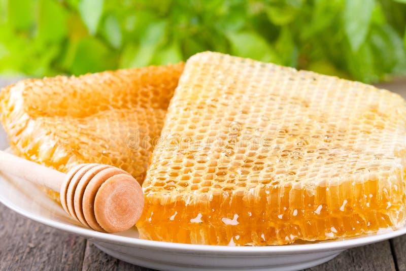 Nids d'abeilles image libre de droits