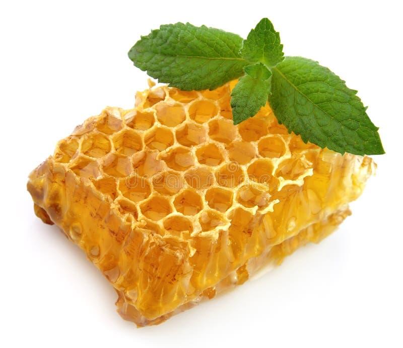 Nids d'abeilles de miel avec la menthe photographie stock