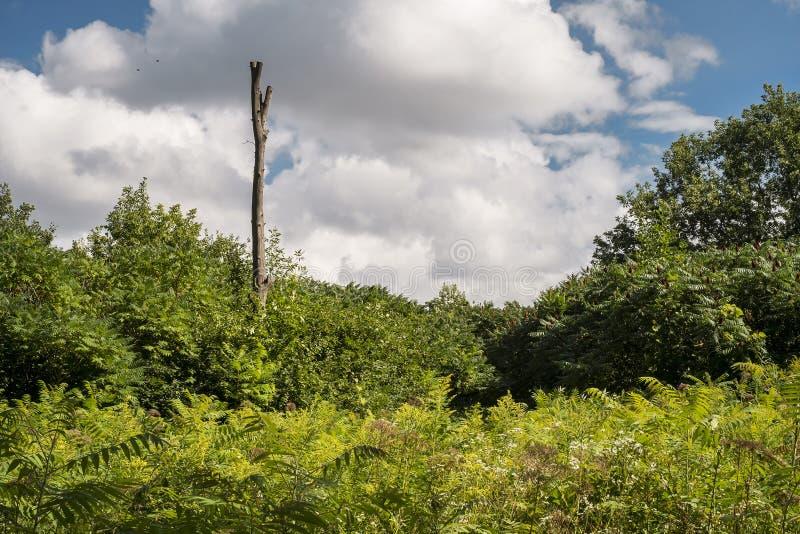 Nieżywa drzewna natury scena obraz stock