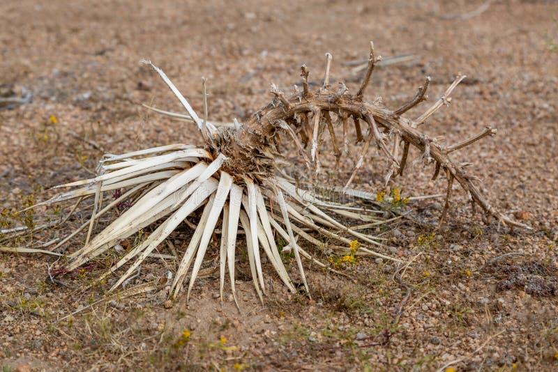 Nieżywa roślina zdjęcia royalty free