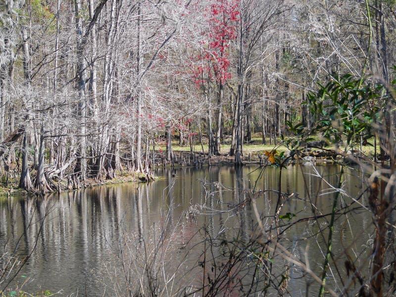 Nieżywa rzeka zdjęcie royalty free