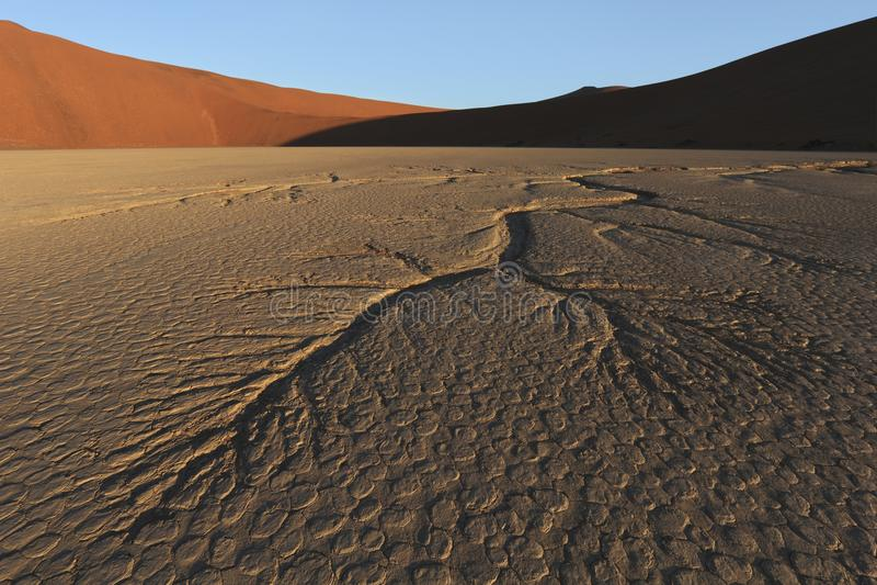 Nieżywa Vlei Namib pustynia Namibia obraz royalty free