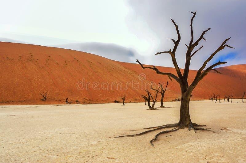 Nieżywa Vlei pustynia, Namibia, Południowa Afryka obraz stock