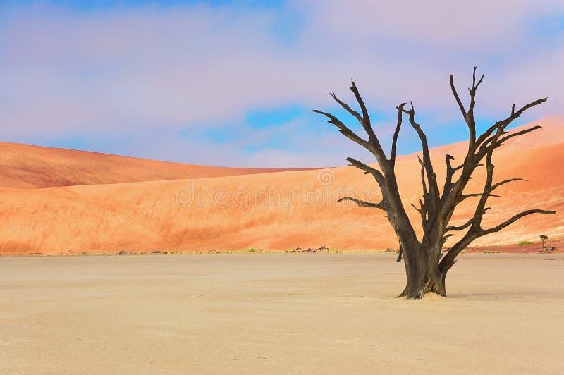 Nieżywa Vlei pustynia, Namibia, Południowa Afryka zdjęcia royalty free