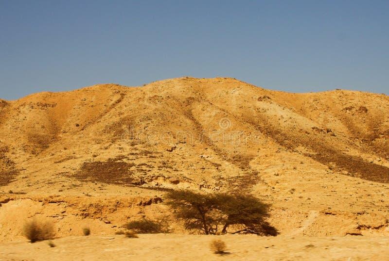 Nieżywego morza widok antyczny miasto Masada zdjęcie royalty free