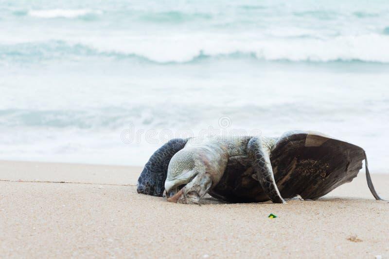 Nieżywi denni żółwie zdjęcie stock