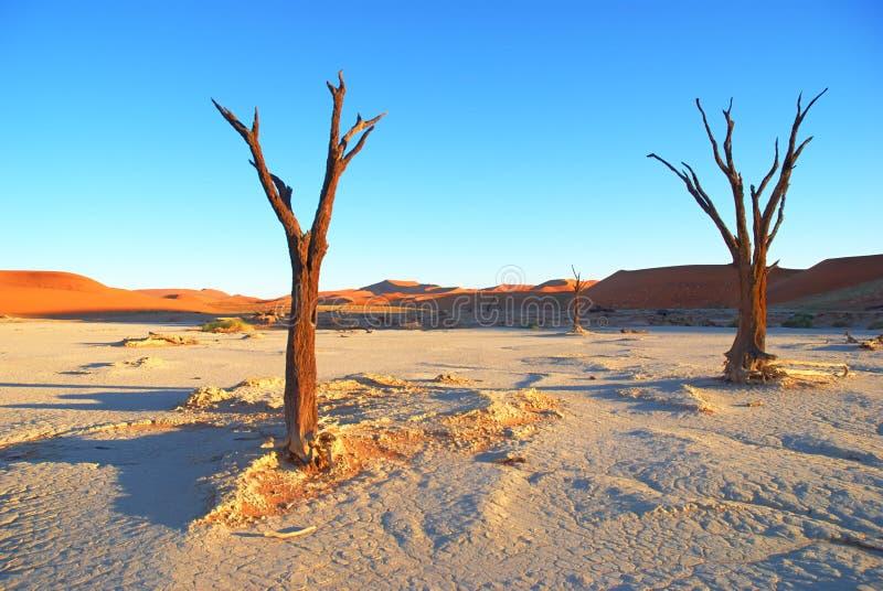 Nieżywi drzewa obrazy stock