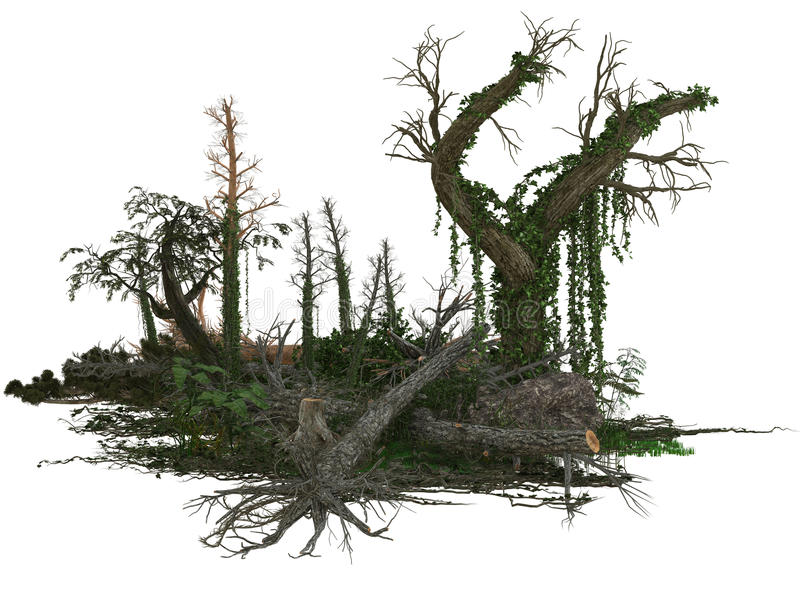 Nieżywi drzewa i rośliny obraz royalty free