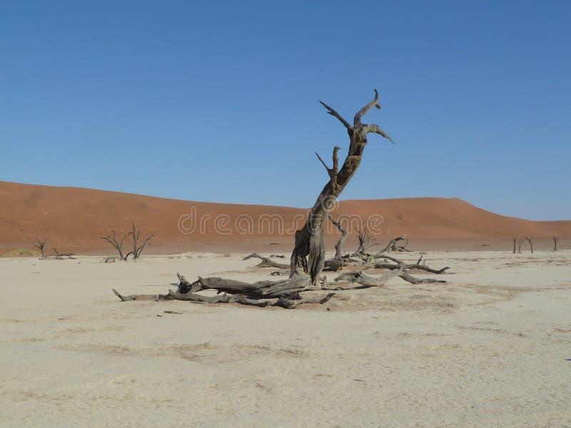 Nieżywi drzewa przy Deadvlei, Sossusvlei Namibia zdjęcia stock