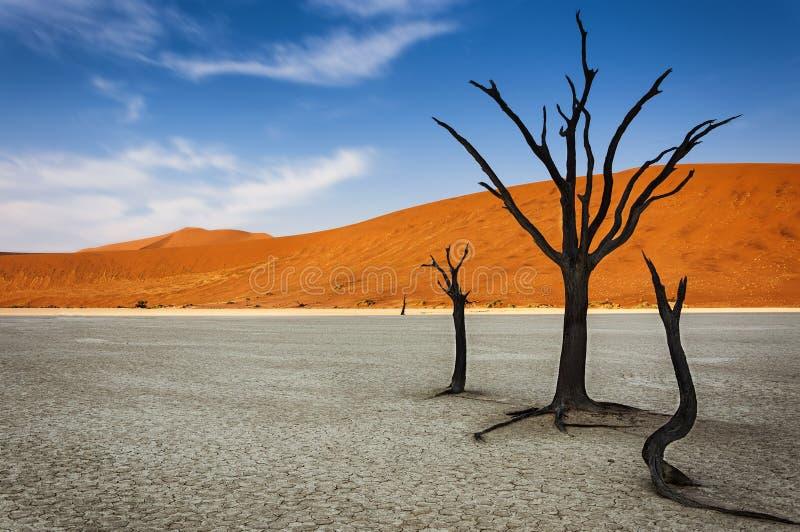 Nieżywi drzewa z pomarańczową piasek diuną w tle w DeadVlei, Namib pustynia, Namibia fotografia royalty free
