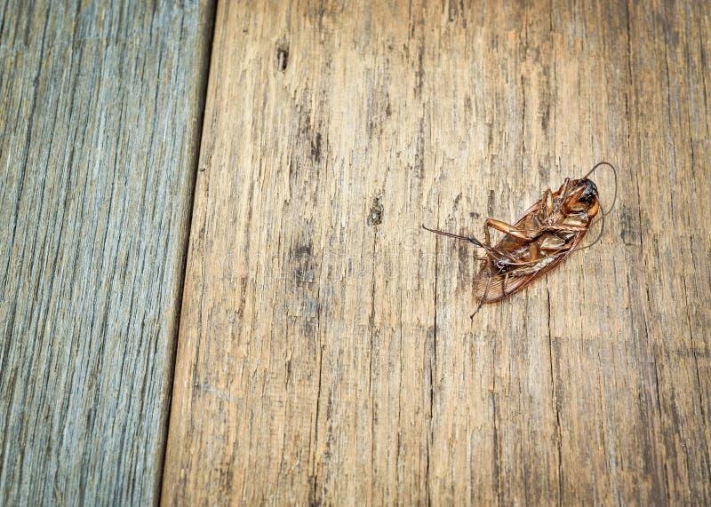 Nieżywi karakany na drewnianej podłoga obraz royalty free