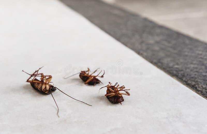 Nieżywi karakany na podłoga z kopii przestrzenią, zabijać przyczyną bakterie i chorobą w domu, fotografia stock