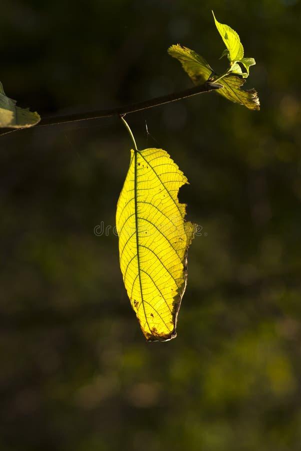 Nieżywi liście zdjęcie stock