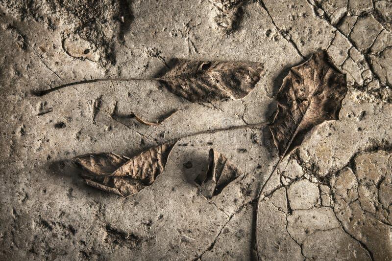 Nieżywi liście na starym kamiennym brukowym kamieniu zdjęcia stock
