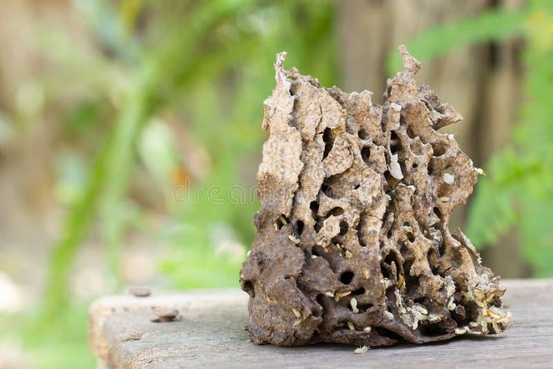 nieżywi termity lub białe mrówki z kopem fotografia stock
