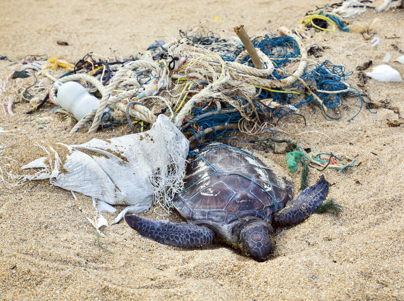 Nieżywy żółw w sieciach rybackich
